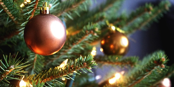 Where to recycle your Christmas tree in Reading