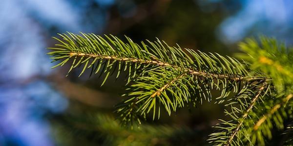 christmas_tree1