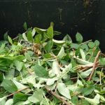 Householders to pay for green waste scheme from April
