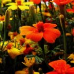 Age UK Berkshire launches new Friendly Gardeners Group